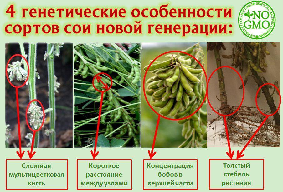 Соя із потенціалом урожайності понад 7 т/га вже на українському ринку