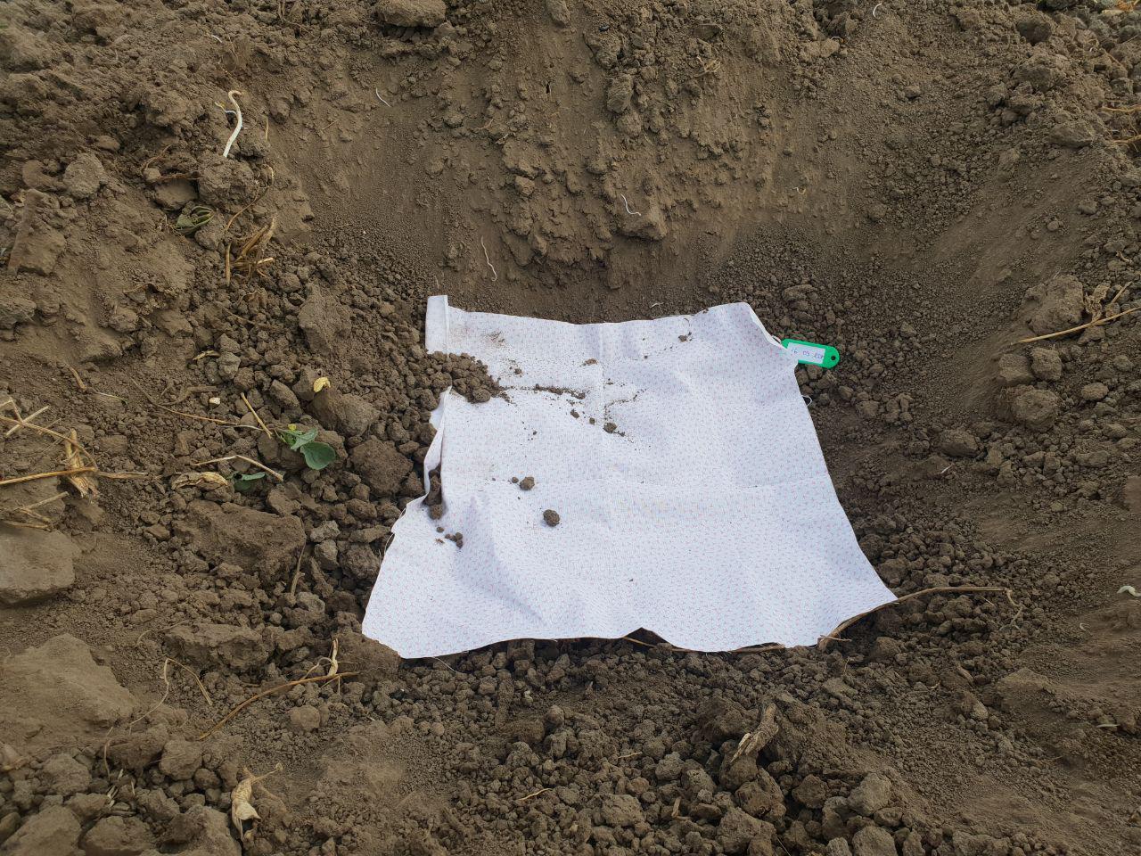 «Поховаємо труси!», — Alfagro запускає тест для вимірювання біологічної активності ґрунтів.
