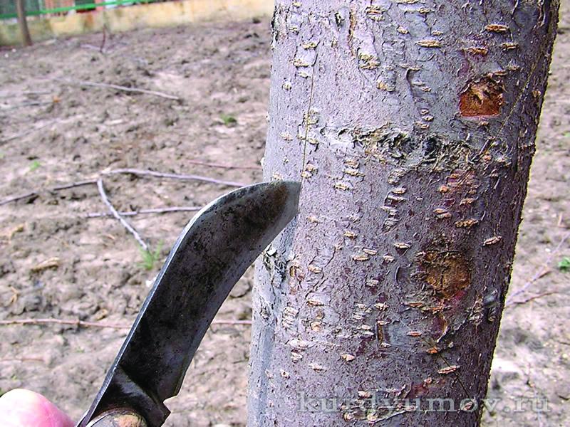 Бути чи не бути? Реанімація пошкоджених дерев
