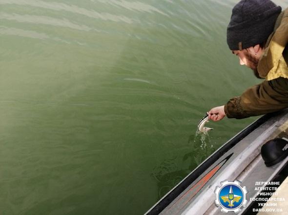 Азовський рибоохоронний патруль попередив порушення на понад 1 млн грн збитків