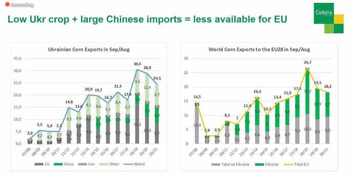 Україна експортує 24,5 млн тонн кукурудзи